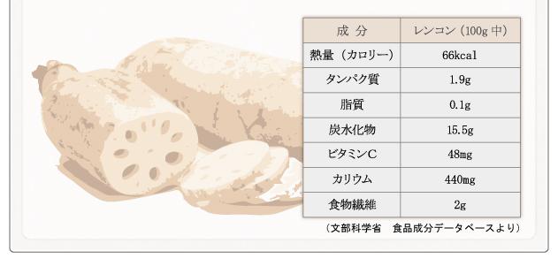 レンコン 栄養