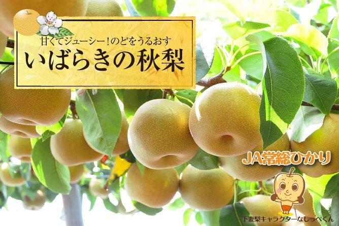いばらきの秋梨プレゼント!