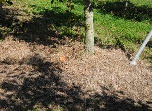 奥久慈りんご園 木の根本の土