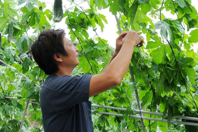 JA茨城むつみ(古河市)の三和地区野菜生産部会の久保和弘さん