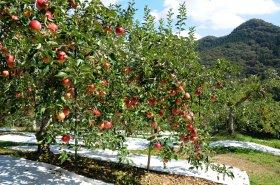 奥久慈りんご園