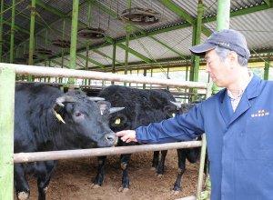 橋本畜産のこだわり 愛情を持って育てる