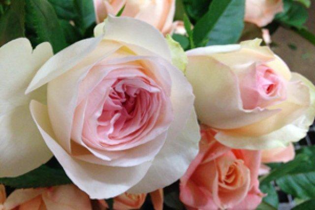 神生バラ園のバラ