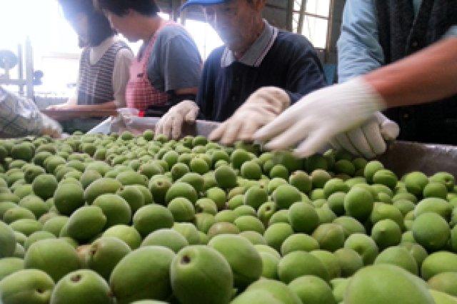 農商工等連携事業計画