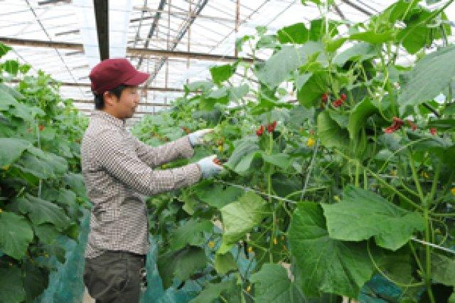 次の世代が継ぎたい農業
