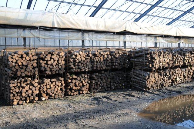 高橋農園 ほだ木の保管
