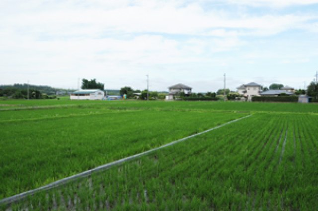 EM菌を使った米作り