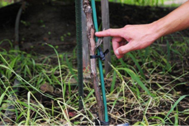 100%植物性のたい肥で土を作る