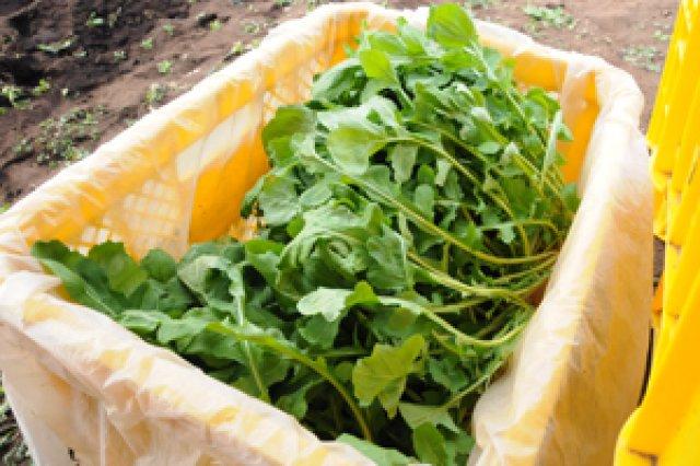 徹底して農薬・化学肥料を使わない栽培を目指して