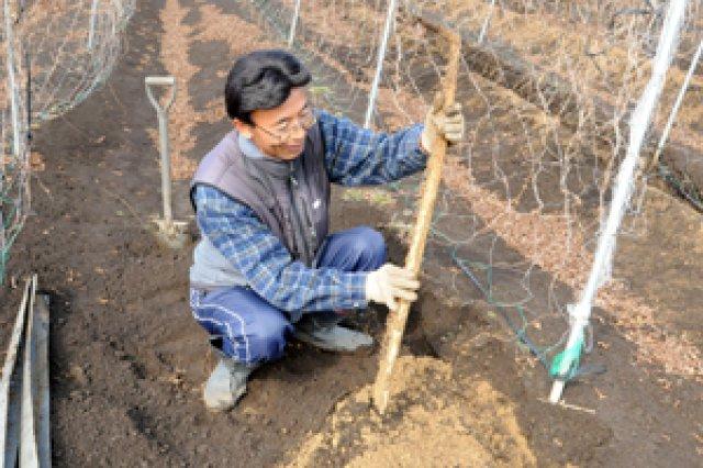 農薬を使わずに作る自然薯2