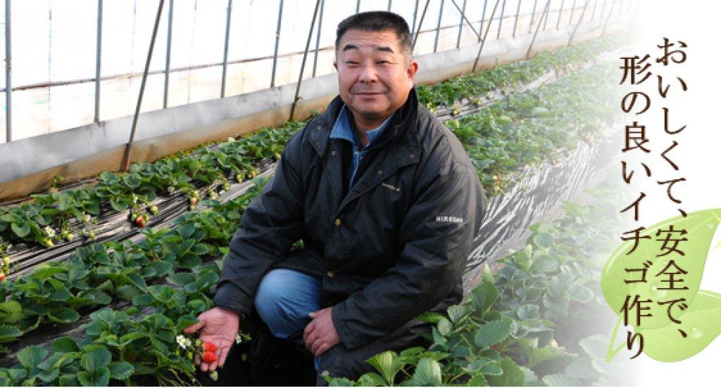 イチゴ作りのプロフェッショナル 浜野博士さん(小美玉市)