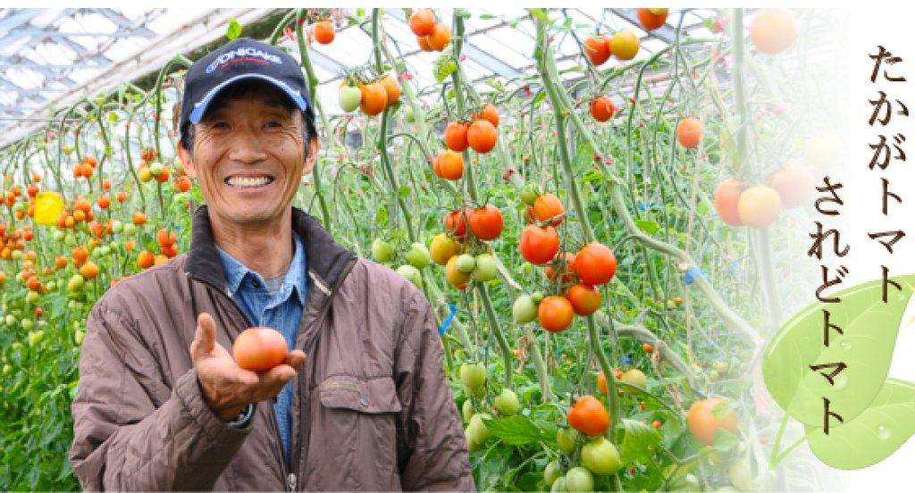 安全・安心・信頼を得るトマトを作る! 伊藤健さん(鉾田市)