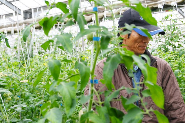 減農薬栽培2