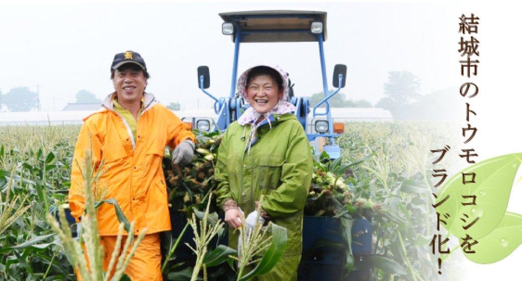 結城市で甘さ抜群のトウモロコシを作る 宮田理也さん(結城市)
