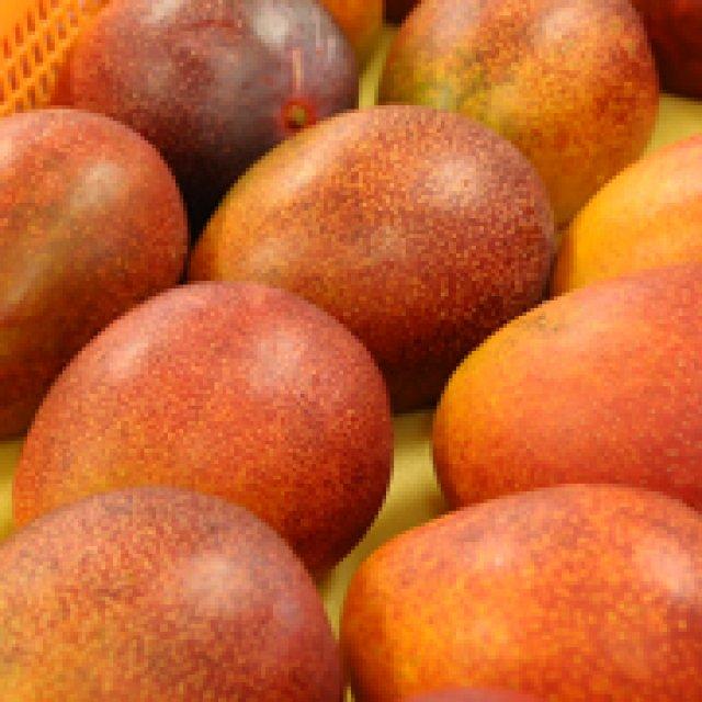 マンゴーは常温で食べましょう