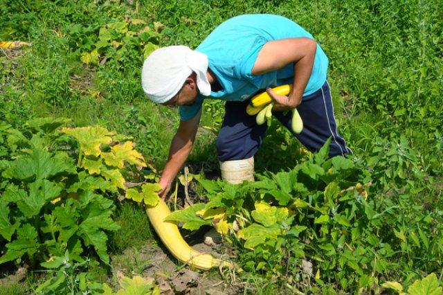 自然農法1