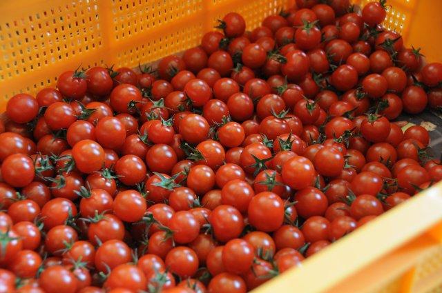 ドロップファーム 美容トマト