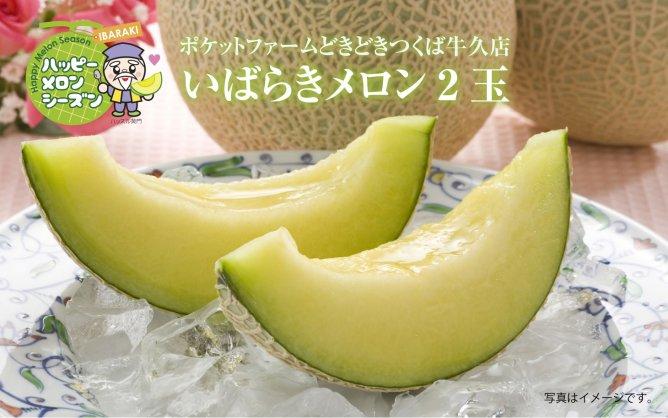 ポケットファームどきどきつくば牛久店【いばらきメロン2玉】