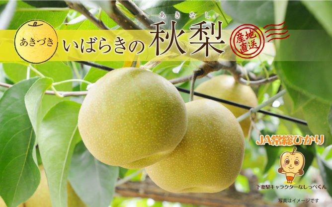 いばらきの秋梨~あきづき~