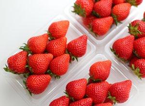 柳田農園のイチゴ