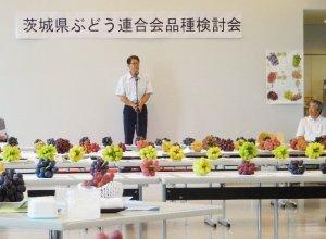 茨城県ぶどう連合会 品種検討会