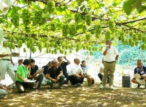 茨城県ぶどう連合会 講習会の様子