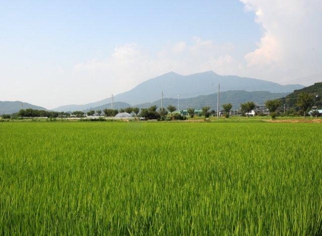 筑波農場 田園