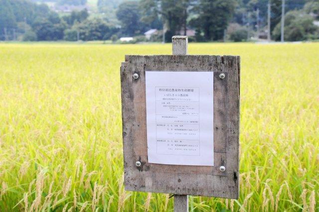 「ななかいの里コシヒカリ」生産圃場には、「いばらきエコ農産物」の看板が立ててあります。