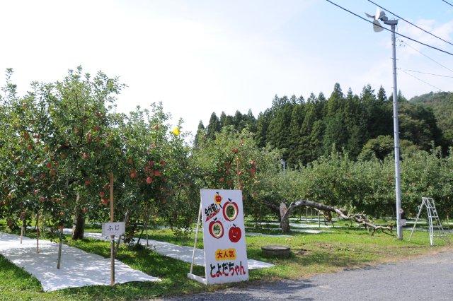 豊田りんご園