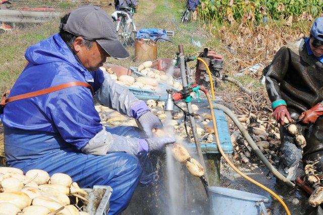 その場で井戸水で洗浄を行う