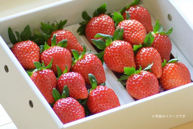 第337回プレゼント企画 村田農園の【イチゴ】