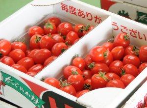 深作農園のミニトマト
