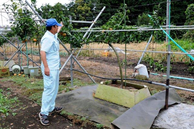 恵水の根圏制御 盛土式試験栽培