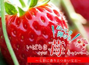 おいしさ弾ける『いばらき苺』キャンペーンバナー