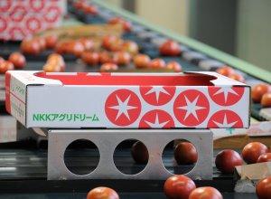 スーパーフルーツトマト選果場