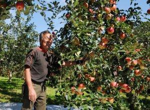 塙さんとりんごの樹