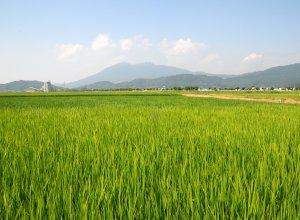 田園風景と筑波山