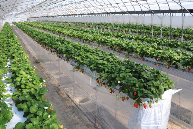 高設栽培の農園