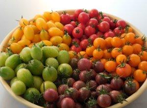 サンパレットに使用されるミニトマト