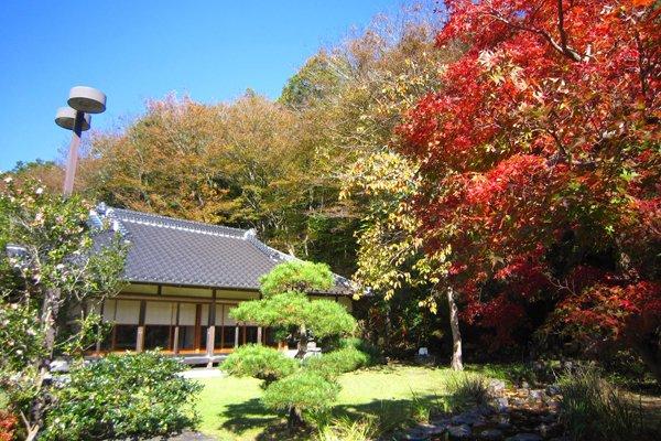 雪村庵 秋の庭園