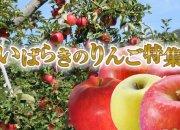 いばらきのりんご特集