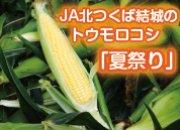 特集 トウモロコシ「夏祭り」