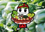 特集「八千代町の白菜」