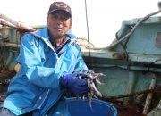 脂の旨みがたっぷり!食べ方自在の深海魚「メヒカリ」