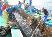 茨城の海を彩る赤い高級魚「タイ」