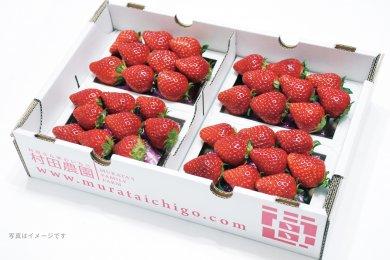 第52回茨城をたべよう連動プレゼント企画 村田農園の【イチゴ】