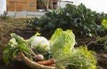 畑のGOCHISO 野菜イメージ