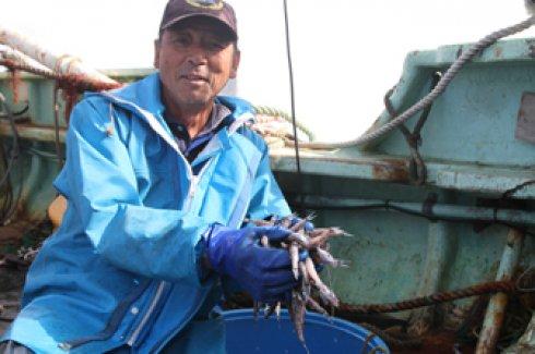 脂の旨みがたっぷり!食べ方自在の深海魚「メヒカリ」)