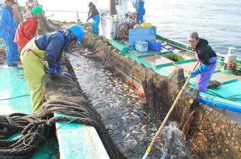 茨城の海を彩る赤い高級魚「タイ」)